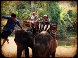 The whole family on elephants