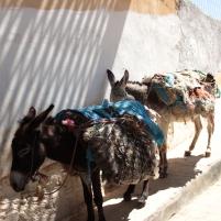 donkey refuel station