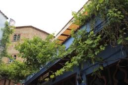 grape vines all over
