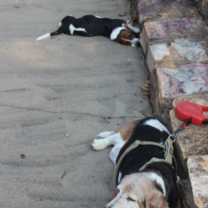 dogs exhausted PRE-hike