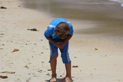 Hunting for shells